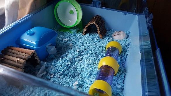 dwarf hamster zoozone