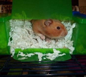 savic hamster heaven penthouse