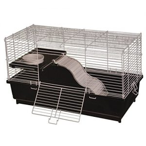 Rat-Home-0